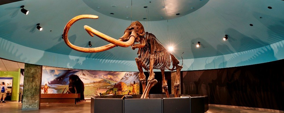 La Brea Tarpits Museum Mammoth New Hero